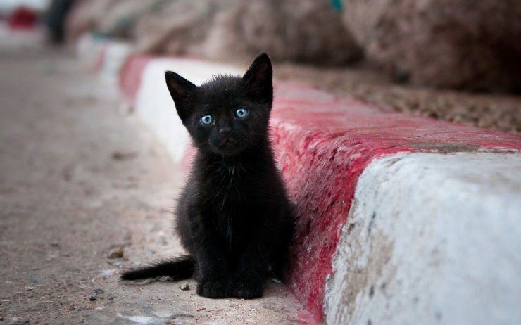 Black-kitten-with-blue-eyes.jpg