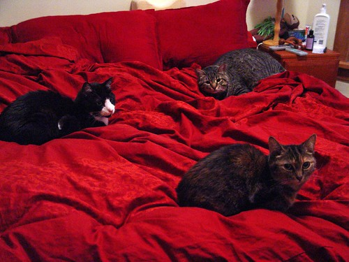 three cats bed.jpg