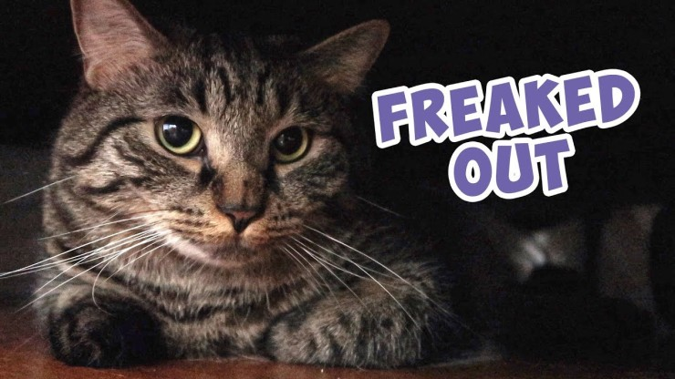 freaked out cat