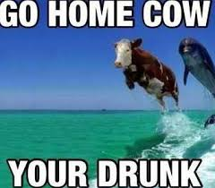 go home cow