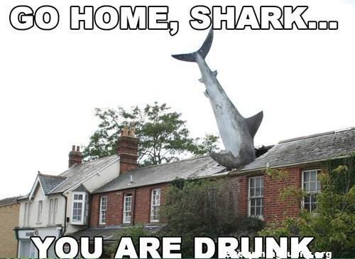 go home shark