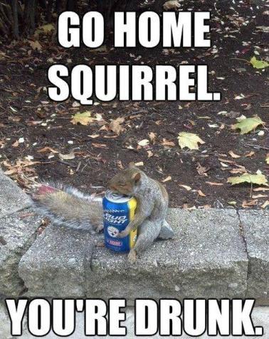 go home squirrel